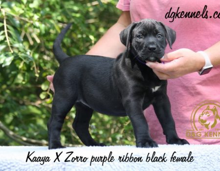 3) Purple Ribon, Black Female