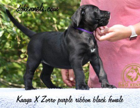 4) Purple Ribbon, Black Female