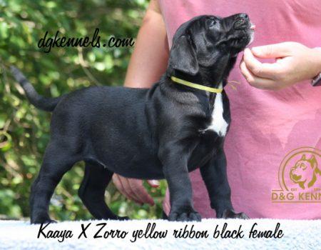 5)yellow Ribbon, Black Female