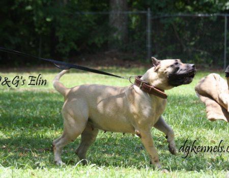 D&g's Elin (3)