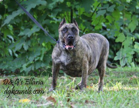 D&g's Ellaria (2)