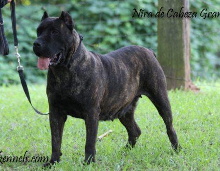 Nira De Cabeza Grande (5)