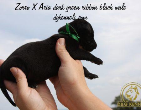 Zorroxaria Dark Green Ribbon Black Male