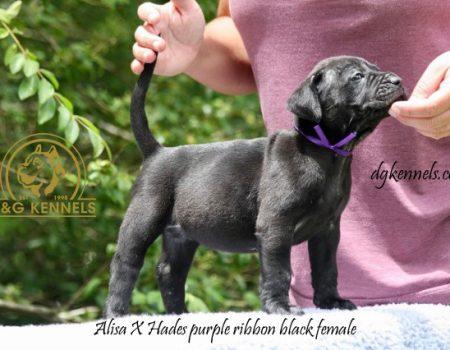 Purple Ribbon Female(8)