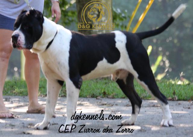 Zorro01